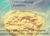 Tren A Revalor -H Finaplix Trenbolone Acetate Steroid Raw Steroid Anabolic Hormone Bubuk